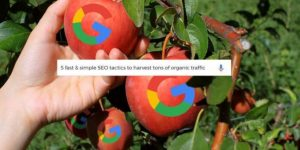 Low Hanging fruit For SEO